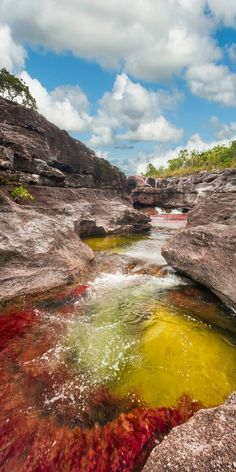 Also known as the River of Five Colors or the Liquid Rainbow Caño Cristales in is crystal clear allowing for the vivid colors emanating from the quartzite rocks below to surface and become visible. Studded with rapids and waterfalls the river al Places Around The World, Oh The Places You'll Go, Places To Travel, Places To Visit, Travel Destinations, Beautiful World, Beautiful Places, The River, Colombia Travel
