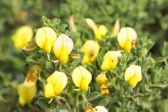 ZIRIPITI flower flores