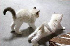 yoga kittens ... Werkt perfect op de molitli gietvloer van echt beton!!! Zelfs de katten worden er blij van:))