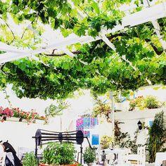 #Mykonos #Greece #Travel #Foodie #GreekLife Katrina Woolverton | Gallery