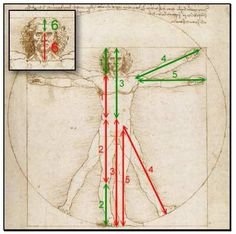 Leonardo da Vinci - Menschliche Proportion und goldener Schnitt ...