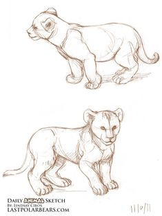 Daily_Animal_Sketch_065