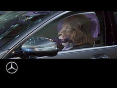 (239) Mercedes-Benz presents: King of the City Jungle | S-Class Commercial - YouTube