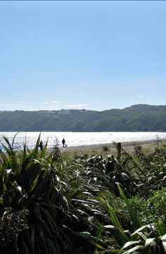 Petone Beach, Wellington. New Zealand