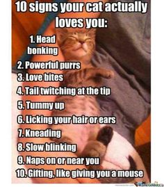10 Signs Your Cat Actually Loves You
