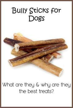 Why Are Bully Sticks One of the Best Dog Treats?