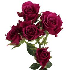 8 bunches for $110 Our Purpleberry Petite roses are a berry pink color with purple undertones.
