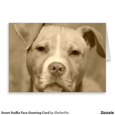 Sweet Staffie Face Greeting Card