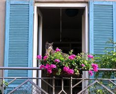 Sacadas e flores - Balconies and flowers