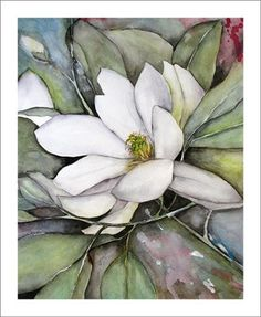 Magnolia Fine Art Prints Watercolor Paintings of White Magnolias, Matted to 11x14, http://www.amazon.com/dp/B0041AB2WK/ref=cm_sw_r_pi_awd_xOrGsb01G32ZC