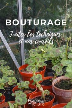 Le bouturage - tout savoir You are in the right place about Vegetable Garden trellis Here we offer you the most beautiful pictures about the Vegetable Garden diy you are looking for. Garden Trellis, Garden Planters, Herb Garden, Organic Gardening, Gardening Tips, Gardening Zones, Vegetable Gardening, Different Plants, Garden Care