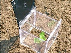 Repurposed CD case as mini portable green house.  Cut the bottoms out of 2 liter bottles for mini green houses too.