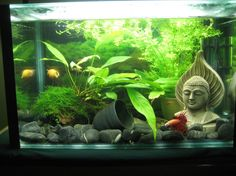 Epic bubble nest & new 10 gal zen tank!-10-gal-community-1.jpg