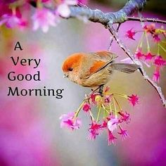 Good Morning Images which you can share with your friends. Best Collection of Good Morning Pictures, Good Morning HD photos 2020 with wishes & messages. Good Morning Wednesday, Good Morning Happy, Good Morning Picture, Good Morning Friends, Good Morning Greetings, Morning Pictures, Good Morning Wishes, Morning Pics, Sunday Wishes