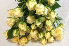 Lemon Ice Spray Rose - Yellow Spray Rose