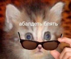 Got Memes, Stupid Memes, Koala Meme, Cute Backgrounds For Iphone, Funny Animal Faces, Hello Memes, Russian Memes, Cute Baby Cats, Fun Live