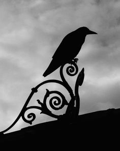 Wrought Iron painted black, and crow naturally black. Look closer and you will observe that the black is something very special - amazing lustres of dark metallic blues combining to what we can only see as black from a distance.