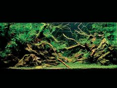 root aquascape | Rainforest Inspired (Tree Roots Aquascape) photo 1IAPLC2007.jpg
