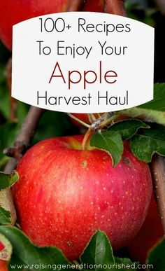 100+ apple recipes-- everything from salads to sweets to savory to sauces! All the apple recipes you'll ever need!