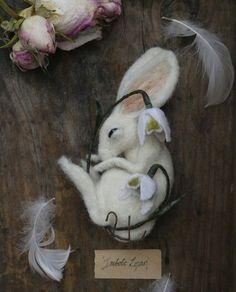 Imbolc lepus, the hare that dreams away the quiet hours amongst the silence of snowdrops. www.thewhisperingwild.co.uk