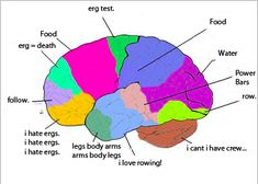 A rower's brain. How it works