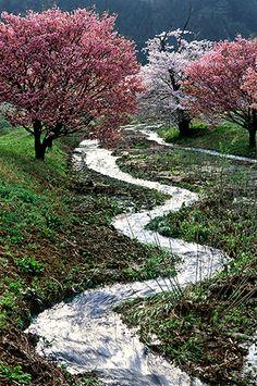 Sakura--Fukushima 里山(入選)|福島の桜