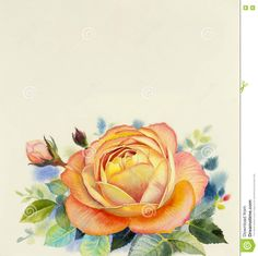 watercolor-painting-original-realistic-orange-color-flower-rose-green-leaves-white-background-76110061.jpg (1301×1300)