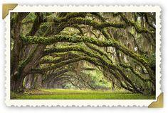 About Us | Oak Tree Manor