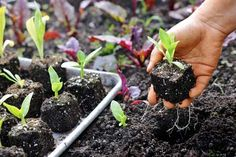 How to grow your own garden from seed.  And now is the time! | Photo: Matthew Benson | thisoldhouse.com