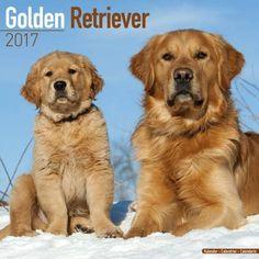 Golden retriever eigenschaften