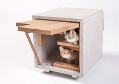 Architects design cat shelters for animal charity fundraiser.