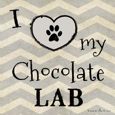 I Love My Chocolate Lab Dog by Summer Snow