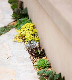 Succulents and sedums are perfect for filling in sparse spaces like along a wall or near a fire pit. The small plants add pops of life and color to otherwise wasted space.