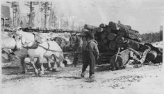 Horses pulling sledge loaded with logs