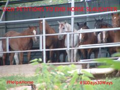 Day #26 of ‪#‎30Days30Ways‬ to ‪#‎HelpAHorse‬, visit and bookmark the ASPCA Advocacy Center to stay up to date and find out how you can be a voice for change for horses. Sign petitions and read about other ways you can help. Just click: http://bit.ly/1MTSjr7SAPCA