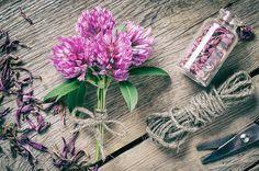 Herbal Musings | Natural Remedies, Organic Herbs, DIY Recipes | The Language of Flowers: Herb Symbolism