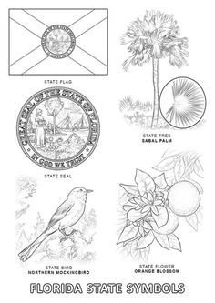Color A Beautiful Mockingbird An Orange Blossom And Cabbage Palm