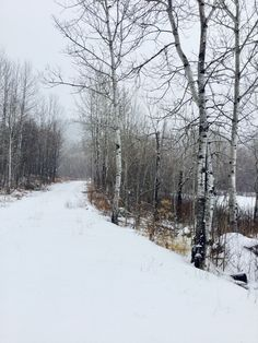 Wintertime Winter Road, Winter Time, Winter Wonderland, Snow, Seasons, Roads, Trees, Outdoor, Winter Landscape