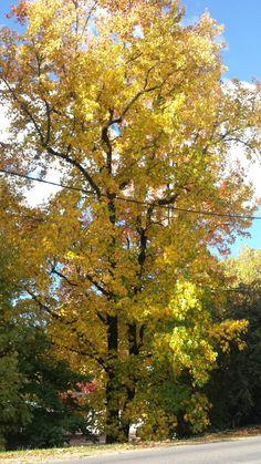 Heron, Autumn, Celestial, Sunset, Places, Photos, Outdoor, Male Celebrities, Plantation Houses