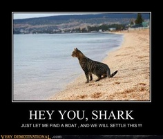 Tough cat!!!