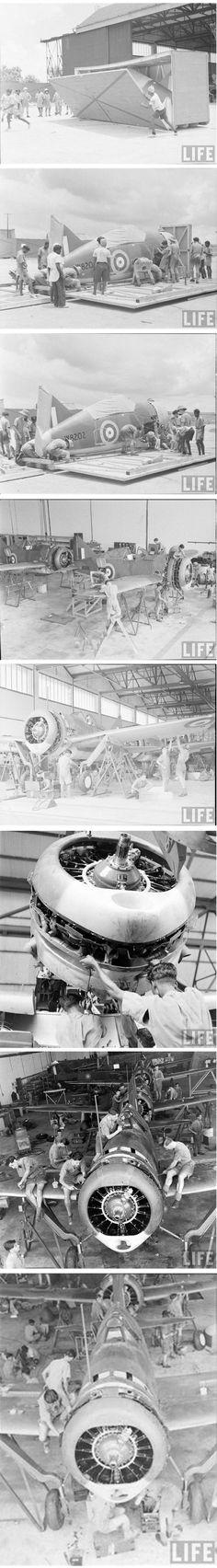 RAF Brewster Buffalo in Singapore, 1941