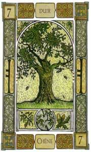 """Celtic Oracle Card """"Oak""""Ogham: Dair. Keywords: Strength, Ppower and Protection; the great Oak is telling you that Your objectives will be achieved if you show a resistant exterior to aggressive forces. Oak Represents Family and Family  represents the strength of unity on which you can rely."""