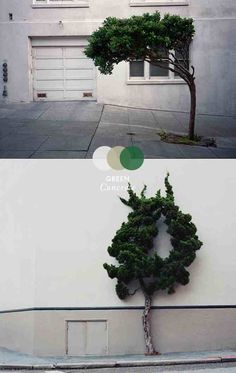 are these trees trying to tell us something?