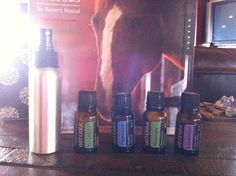 Weekly Essential: Fly Relief for Horses - Insect Repellant. drops oil per 4 oz. water in a spray bottle. Trying Peppermint first (flies), then Lemongrass (mosquitoes). If only using one oil, use drops per 4 oz. Fly Repellant, Insect Repellent, Fly Spray For Horses, Bite Relief, Doterra Peppermint, Essential Oil Uses, Citronella, Doterra Essential Oils, Sprays