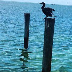 #floridakeys #view #turquoise #moment #textures #scene #nature #naturelovers #minimalist #minimal