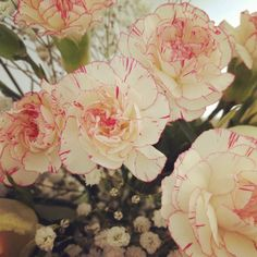 Baby pink carnations