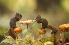 I think it's a serve yourself by Andre_Villeneuve