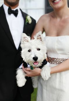 If my Westie, Max, doesn't like being fluffy. I'm pretty sure he wouldn't like a bow tie, but I would SO try it!