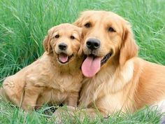 mommy dog and puppy