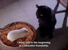 All images belong to cbs, paramount and Archie comics. Salem Sabrina, Sabrina Cat, Funny Animal Pictures, Funny Animals, Cat Qoutes, Quotes, Salem Cat, Salem Saberhagen, Sabrina Spellman